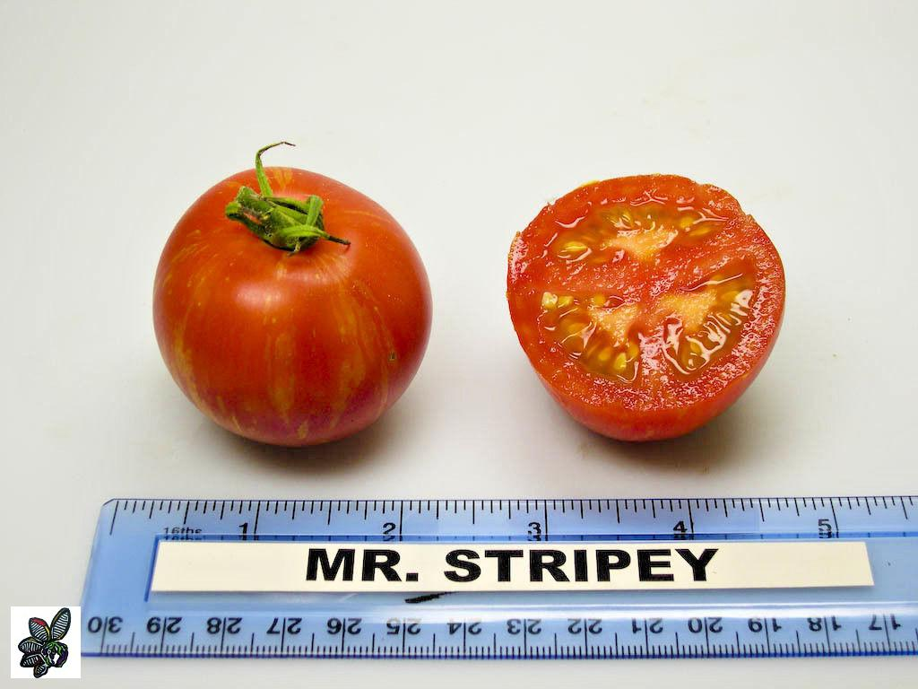 Tomate Mr. stripey - 50 semillas