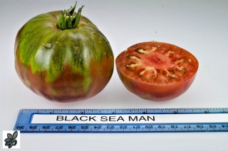 Tomate Black sea man - 20 semillas
