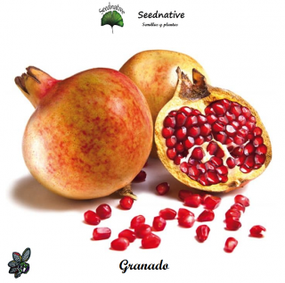 Punica granatum - Granado - 50 semillas - Pomegranate
