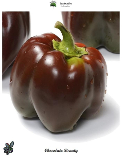 Pimiento Chocolate Beauty - 50 semillas - seeds