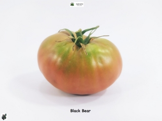 Tomate Black Bear - 25 semillas