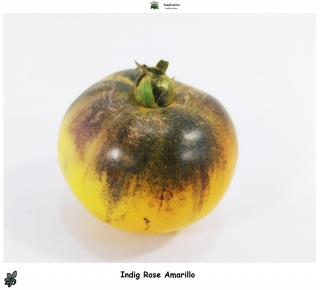 Tomate Indigo rose amarillo - 10 semillas - seeds