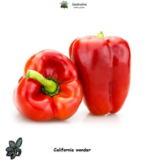 Pimiento California wonder - 150 semillas