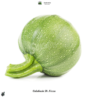 Calabacin Nizza - 50 semillas - seeds