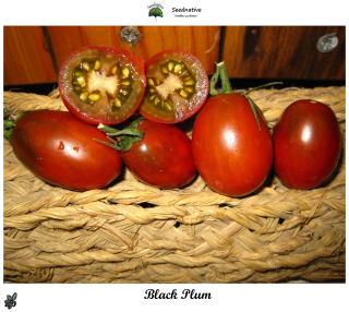 Tomate Black Plum - 30 semillas
