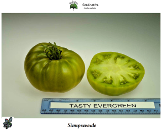 Tomate Siempreverde - 30 semillas - var. tomate antiguo - Tasty Evergree