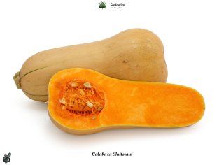 Calabaza Butternut - 30 semillas - seeds